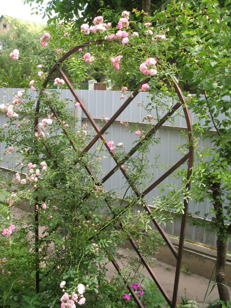 Как сделать подставку для розы плетистой своими руками 32